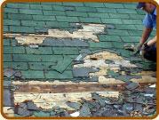 homeowners insurance raccoon damage