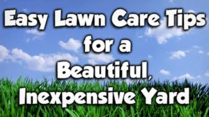 inexpensive lawn care